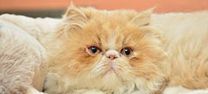 Feline health articles at Eastgate Animal Clinic