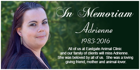 In Memoram-Eastgate Animal Clinic