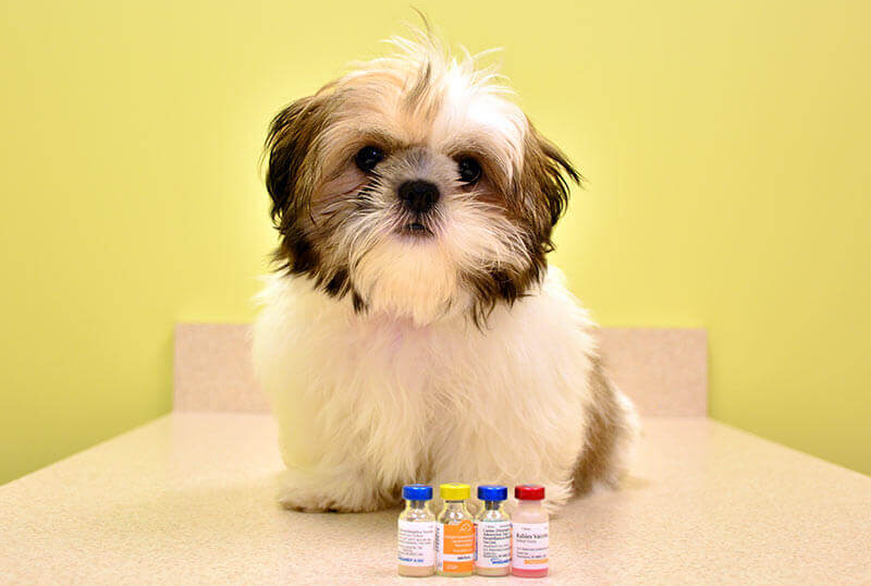 Pet Vaccinations: Protect Your Pet